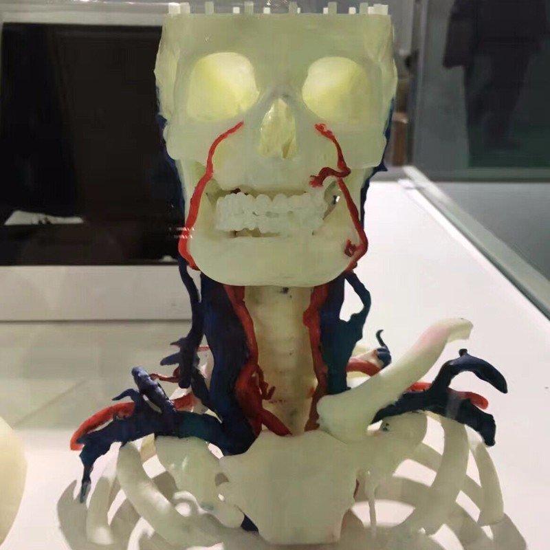 吸血僵尸模型