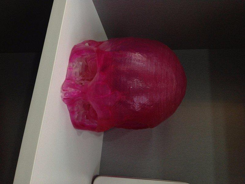 医用医学手板人体头颅结构模型
